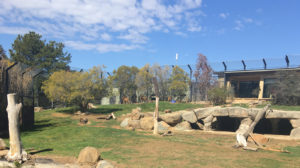 accessible national zoo canberra review