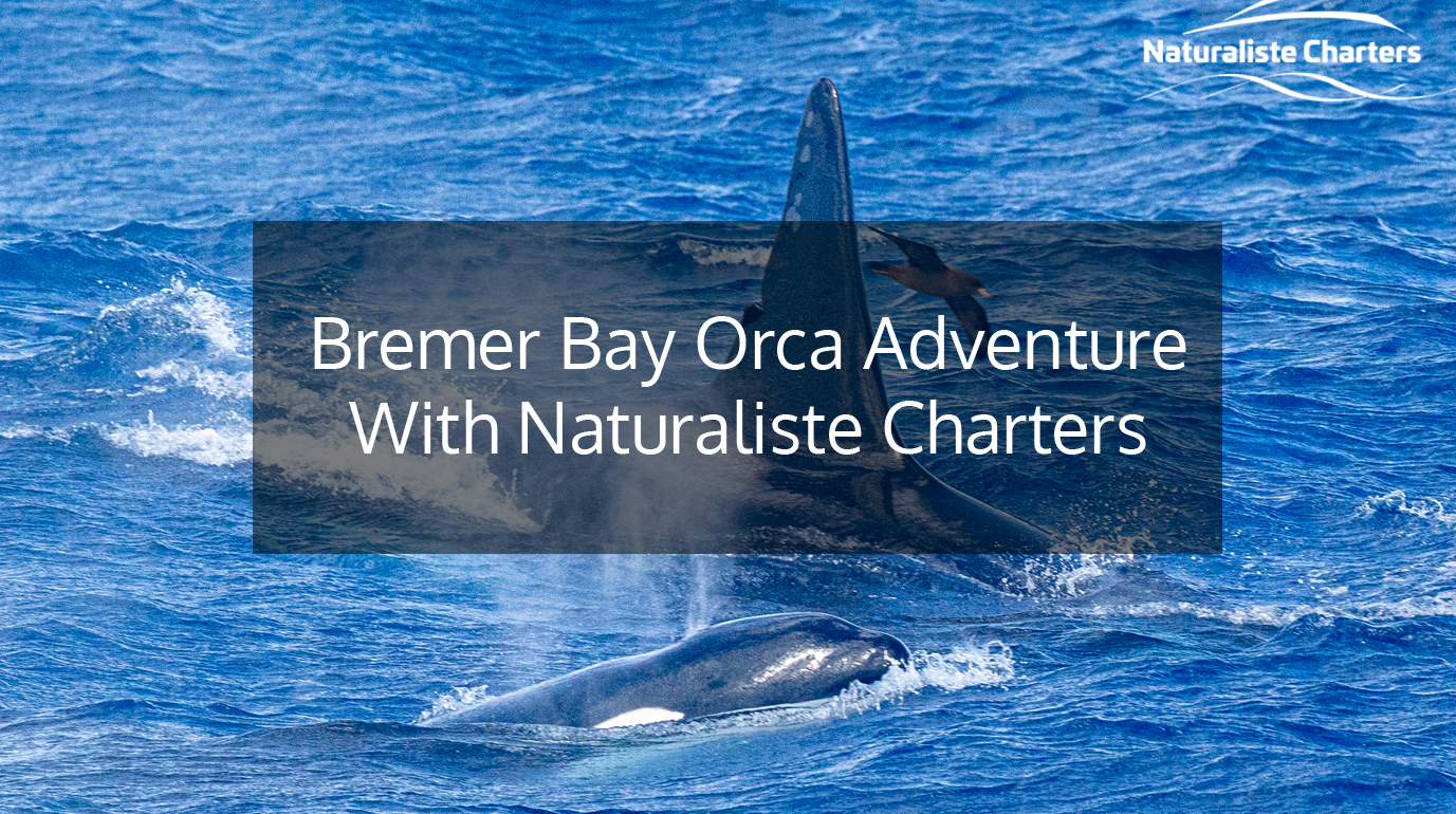 Naturaliste Charters Wheelie Accessible Adventures