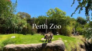 Perth Zoo Access Review
