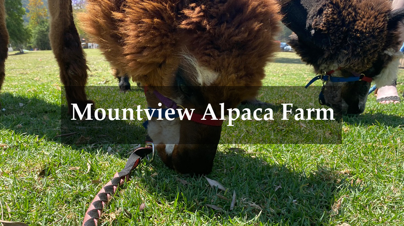 Mountview Alpaca Farm Wheelchair Access Review Cover