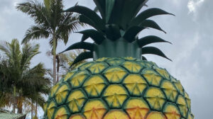 big Pineapple Cover