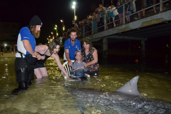 tangalooma dolphin feeding wheelchair