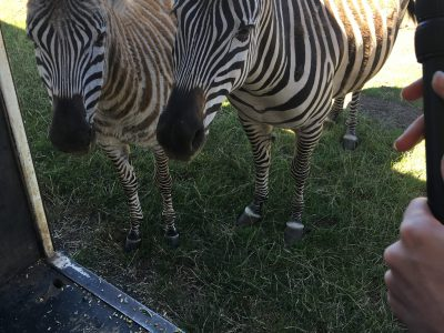 zoo wheelchair accessible hobart